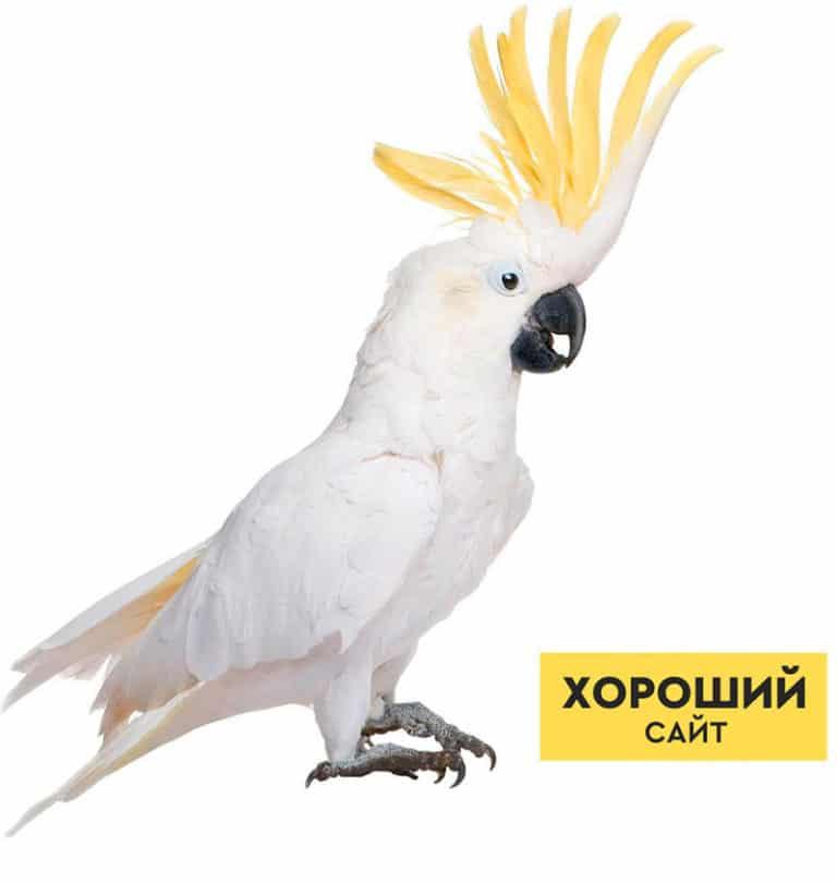 Создание сайтов в Москве, реклама и продвижение